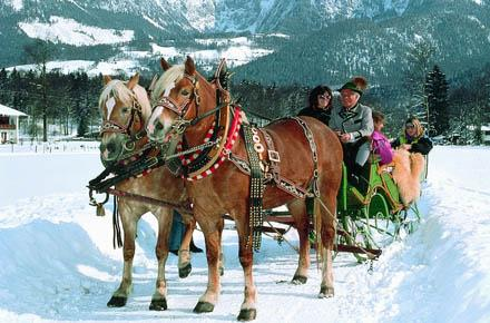 HORSE SLEIGH RIDE and FEEDING THE DEER